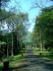 KILAS BALIK KEBUN RAYA PURWODADI DI MALANG, www.outboundindonesia.com, 081334664876